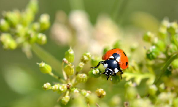 Why the pesticides or chemicals should not be used?